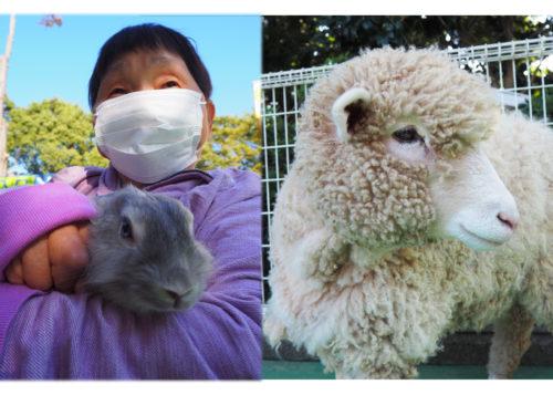平塚総合公園ふれあい動物園